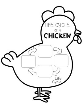 All About Chickens Flip Book
