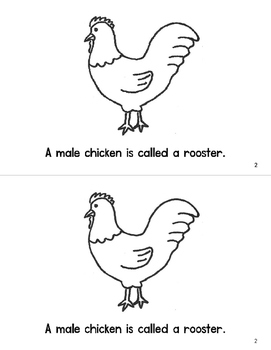 All About Chickens Emergent Reader