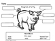 All About Pigs, Writing Activities, Graphic Organizers, Diagram