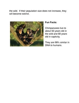 All About Chimpanzees
