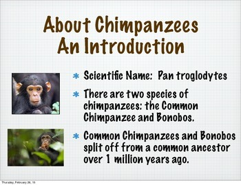 All About Chimpanzees eBook