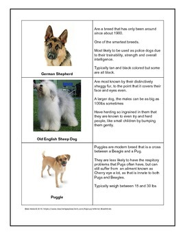 All About Dogs | 4 page handout packet fun reading