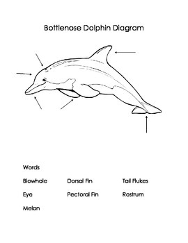 All About Dolphins Nonfiction Research Book