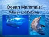 All About Dolphins and Whales Powerpoint