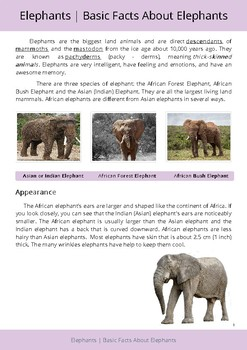 All About Elephants!