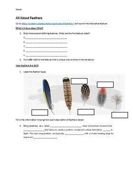 All About Feathers Online Lab Worksheet