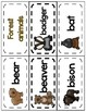 All About Forest Animals Word Wall Picture Cards