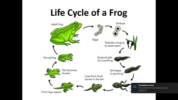 All About Frogs PowerPoint slide show