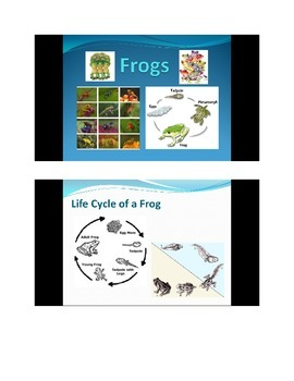 Frogs PowerPoint slideshow - photo gallery