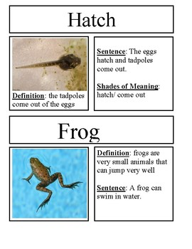 All About Frogs Vocabulary Cards