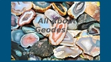 All About Geodes Powerpoint