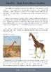 All About Giraffes!