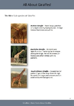 All About Giraffes!