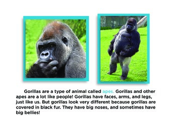 All About Gorillas Non-Fiction Book PK-1