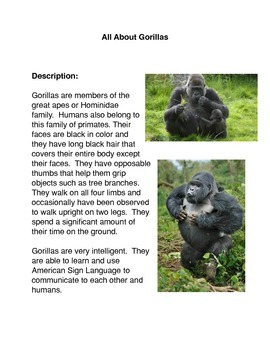 All About Gorillas