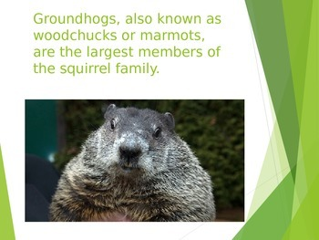 All About Groundhogs:  Facts and Fun