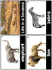All About Habitats- (Ocean, Savanna, Rainforest, Desert, Polar) Science