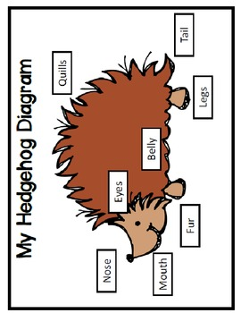 All About Hedgehogs!