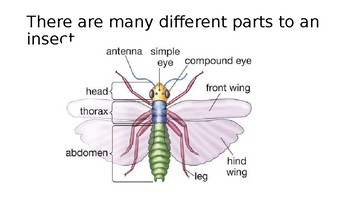 All About Insects