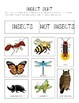 All About Insects: An Interactive Science Unit