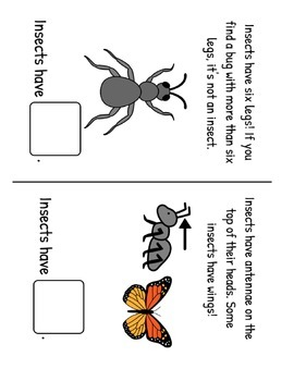 All About Insects! Fact and Vocabulary Book