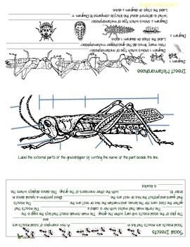 All About Insects Foldable