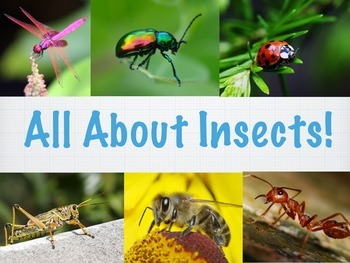 All About Insects- Interactive Non-Fiction Book
