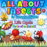 All About Insects | Life Cycle and Parts of an Insect in G