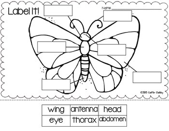 Insects: Math, Literacy, and SO Much More! (Aligned to Common Core)