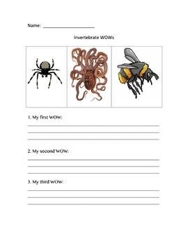 All About Invertebrates