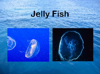 All About Jellyfish Powerpoint