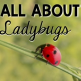 Ladybugs Life Cycle
