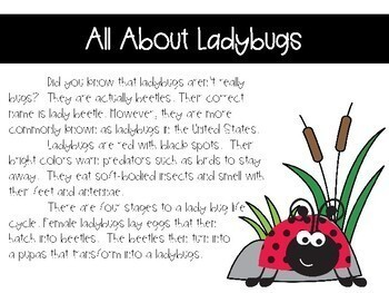 All About Ladybugs Interactive Digital Notebook {PRINT & DIGITAL}