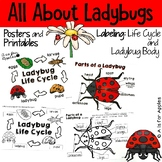 All About Ladybugs! {Life Cycle, Ladybug Bodies}