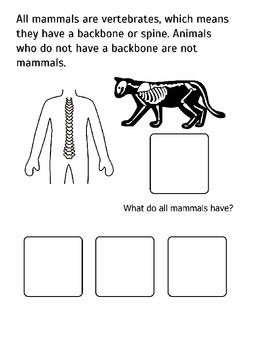 All About Mammals! Adapted Book