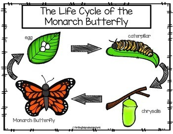 All About Monarch Butterflies