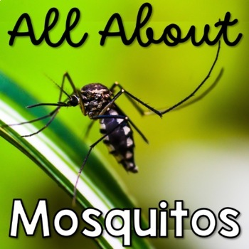 All About Mosquitoes Life Cycle and more