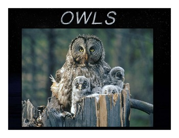 All About Owls