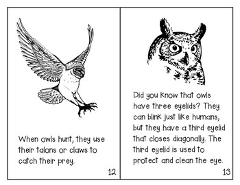 All About Owls: Informational Mini Book