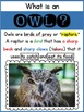 All About Owls {Nonfiction and Literacy Unit}