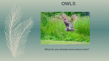 All About Owls Power Point
