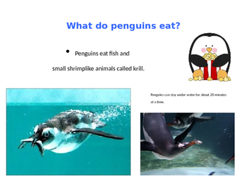 All About Penguins!