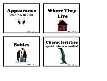 All About Penguins Activity