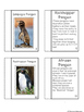 All About Penguins Mini Book and Graphic Organizers!