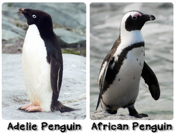 All About Penguins Small Poster Set