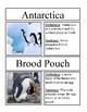 All About Penguins Vocabulary Cards