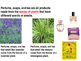 All About Plant Products PowerPoint