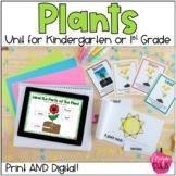Plant Unit For Kindergarten or First Grade: Print and Digital for Google Slides