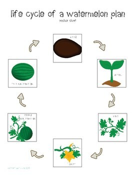 All About Plants Interactive Science Unit for Special Education