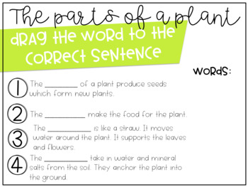 Plants and Seeds Digital Resource